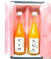 木野本さん柑橘セット
