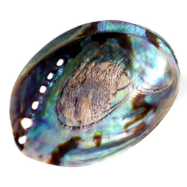 アバロンシェル ホワイトセージの浄化皿 パウアシェル 貝殻 ニュージーランド産