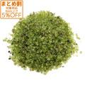 ペリドット(橄欖石) 高品質 さざれ石 100g 天然石 パワーストーン 浄化グッズ