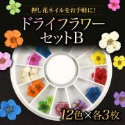 【ゆうパケット対象商品】押し花ネイルをお手軽に!フラワーネイル ドライフラワーセットB 5枚花12色(各3枚)