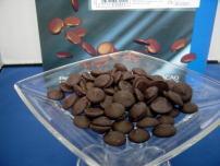 cacaobari01.jpg