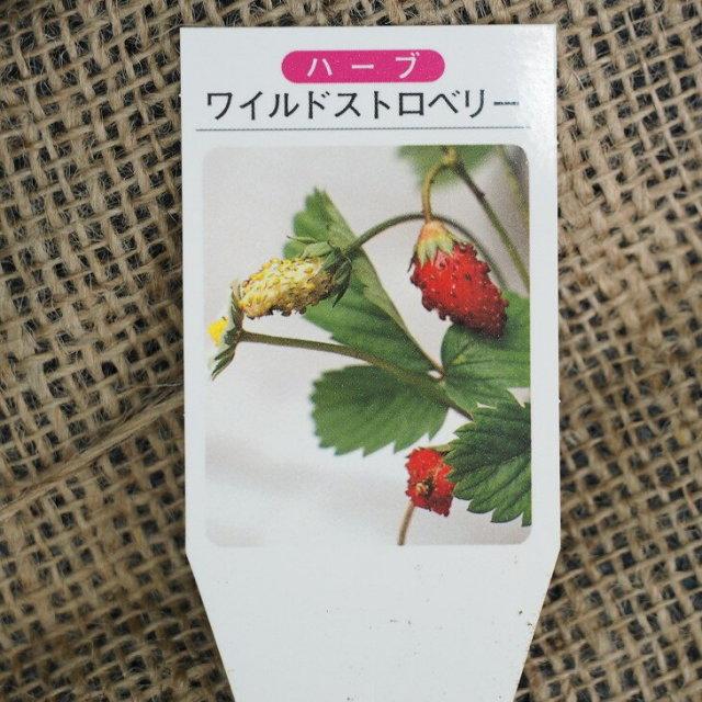 ワイルドストロベリー 赤実