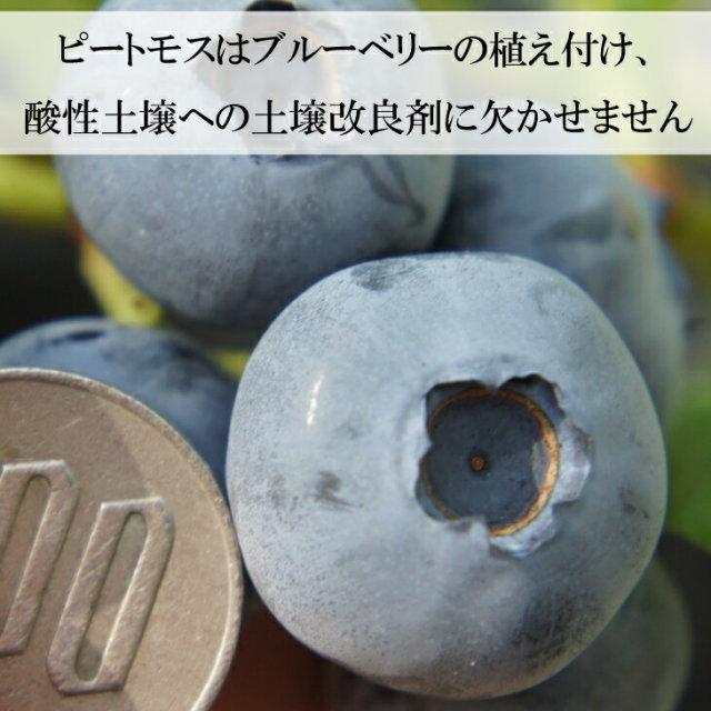 土中に空気層ができる毛足の長い ピートモス 北海道産