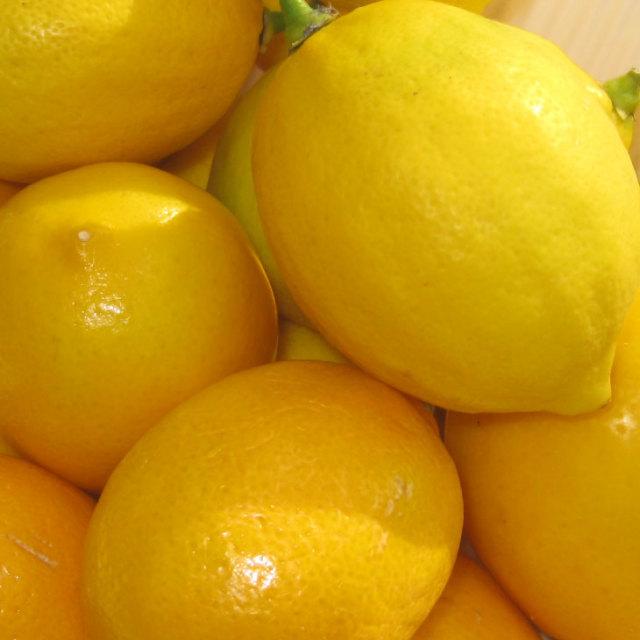 トゲなし ビアフランカ レモン