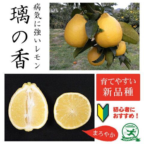 レモン りのか