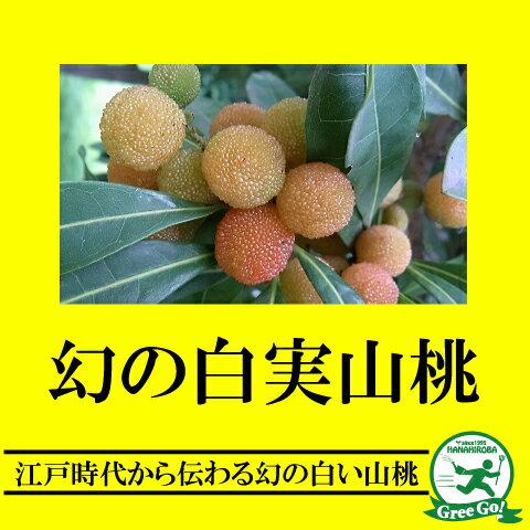 白実 山桃