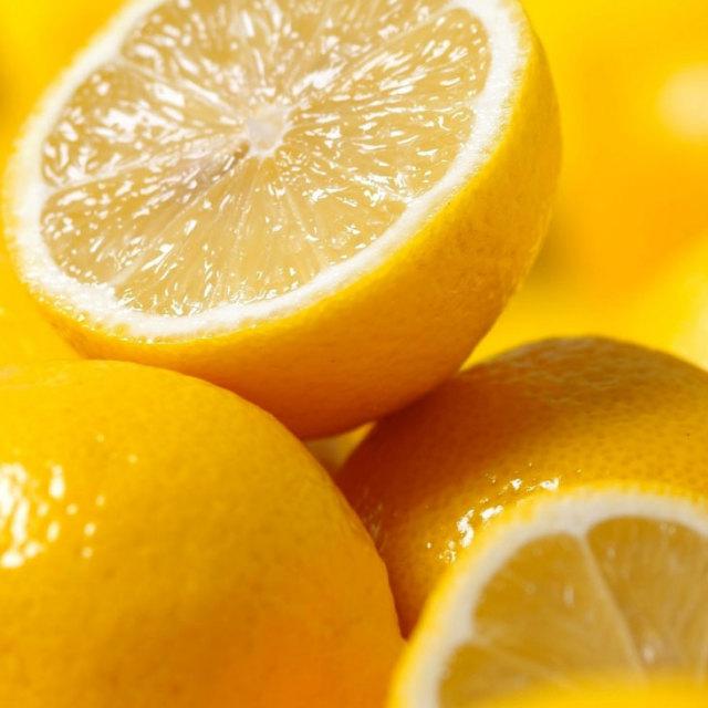 レモン 【スイートレモネード】 1年生 接ぎ木苗