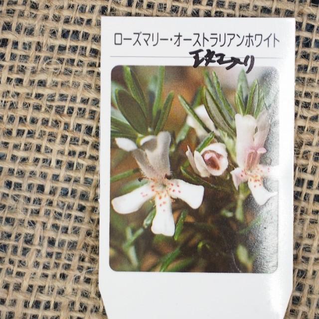 ハーブ 苗 【ローズマリー オーストラリアンホワイト(斑入)】 3号ポット×5株セット ハーブ苗 セット