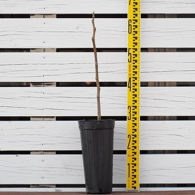 いちじく専用 有機肥料 【いちじくがおいしくなる肥料 (アミノ酸入り) 2kg 】 無花果 肥料 園芸 固形肥料 園芸用品 ガーデニング 雑貨