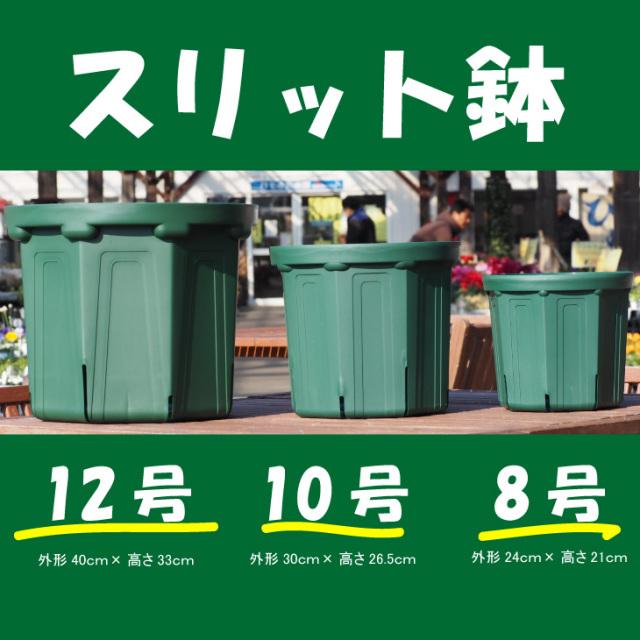 選べるスリット鉢 【モスグリーン色】  外形24cm×高さ21cm(内径20.5cm 8号鉢相当)