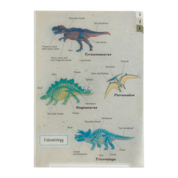 STUDY HOLIC A5ポケットクリアファイル<古生物学>ST-010
