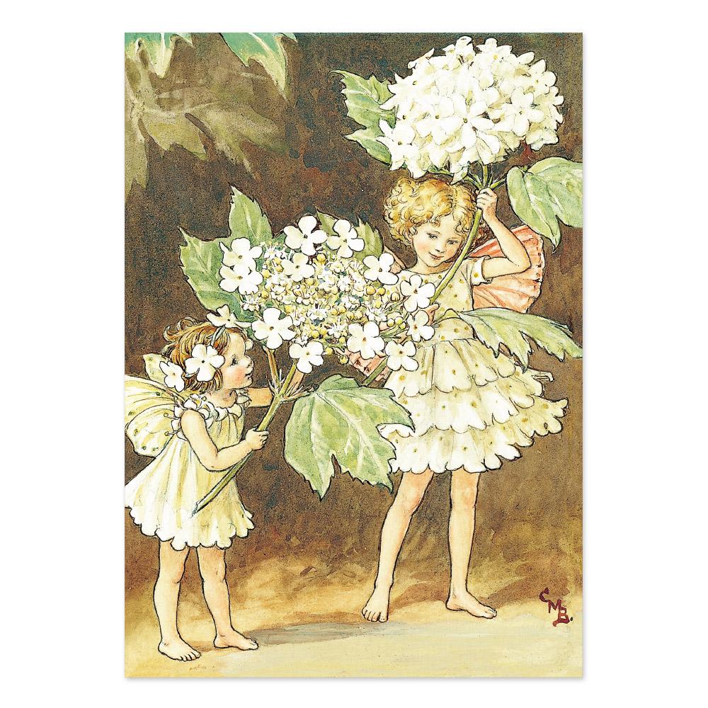 FLOWER FAIRIES ポストカード<Guelder Rose Fairy>