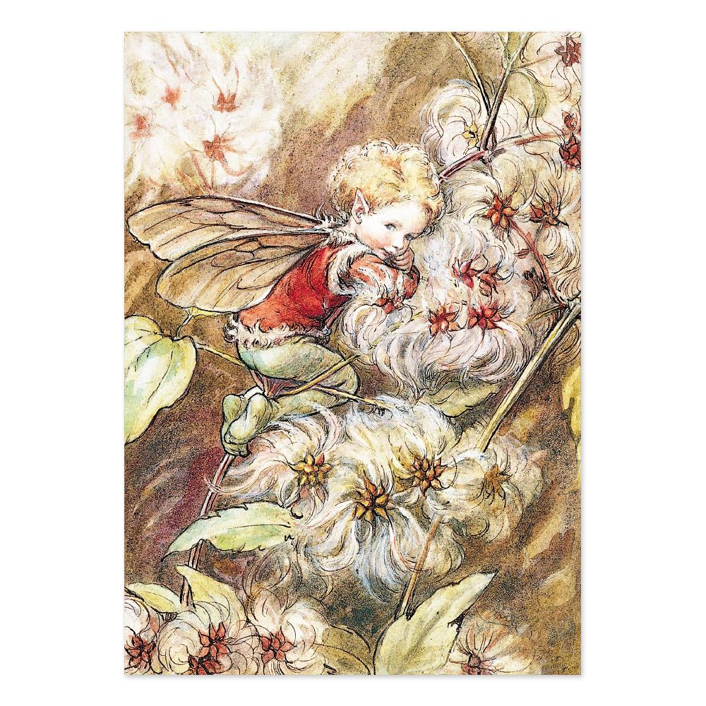 FLOWER FAIRIES ポストカード<The Old-Man's Beard Fairy>