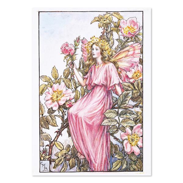 FLOWER FAIRIES ポストカード<The Wild Rose Fairy>FF-142