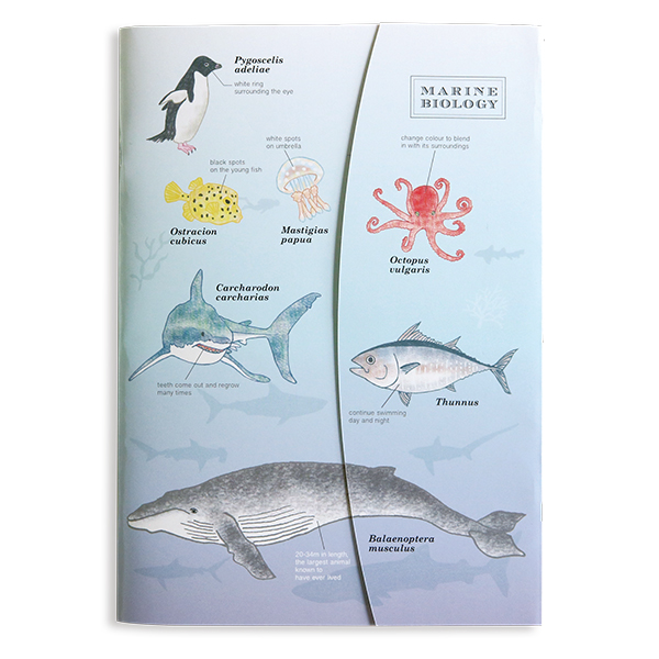 STUDY HOLIC A5ノート<海洋生物学>ST-144