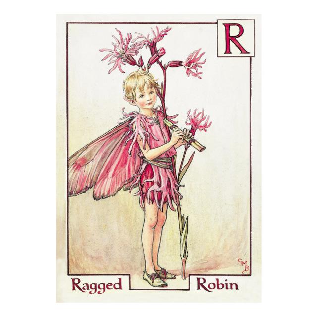FLOWER FAIRIES ポストカード<Ragged Robin Fairy>