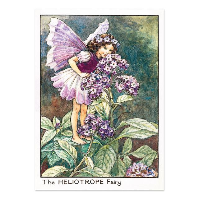 FLOWER FAIRIES ポストカード<Hellotrope Fairy>