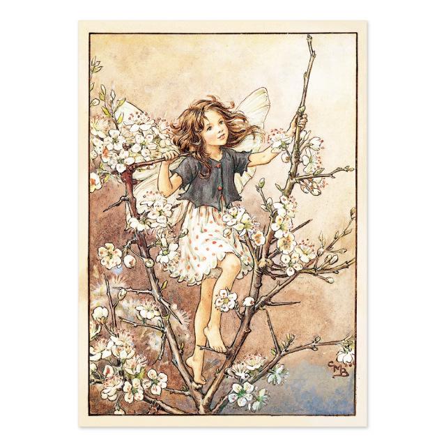 FLOWER FAIRIES ポストカード<The Blackthorn Fairy>