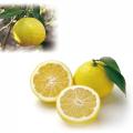食べる小魚(包装込65g)