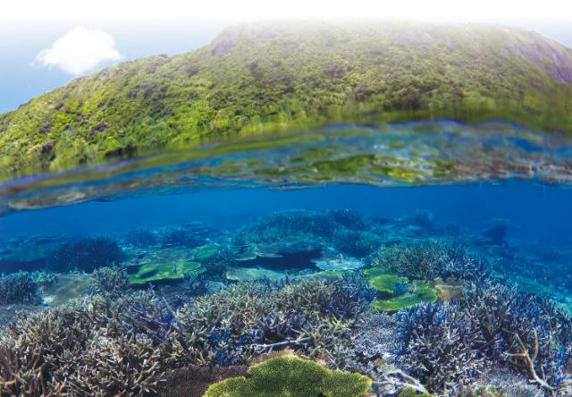 宮古サンゴ礁