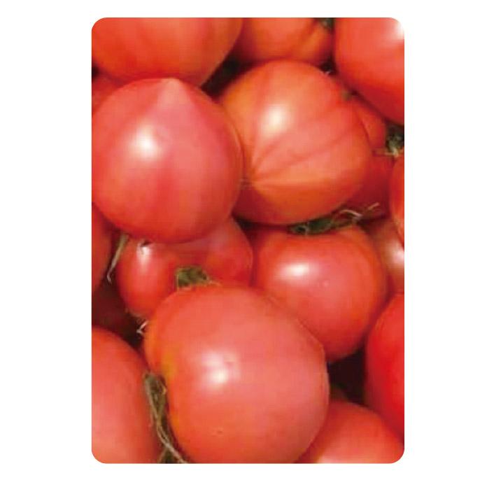 わかまっさんげぇの 音楽トマト 「セレブスウィート」