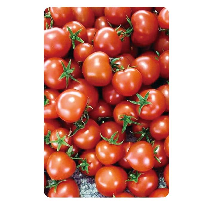 わかまっさんげぇの 音楽トマト 「レッドホープ」