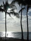 Hama Kena オリジナルフォト 午後のワイキキビーチ