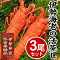 KM-3 伊勢海老の活蒸し 3尾 [冷凍]