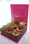 ミニ多肉植物チョコレートボックス