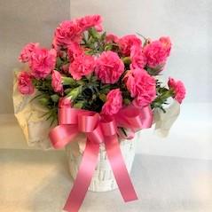 母の日 カーネーション鉢 ピンク [HH-3000-2]