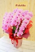 開店・開業のお祝いに「胡蝶蘭3本立・ピンク」