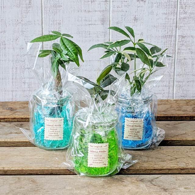 ミニ観葉植物セット