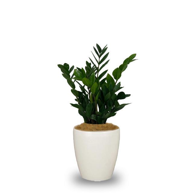 観葉植物(M)