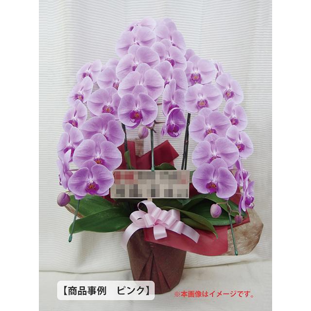 大輪胡蝶蘭事例3万円クラス