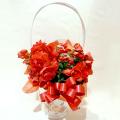 MD-005 リーガスベコニア花鉢