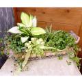SF-018 観葉植物の寄鉢