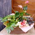 SF-020 ピンクのアンスリュームと観葉植物の寄鉢