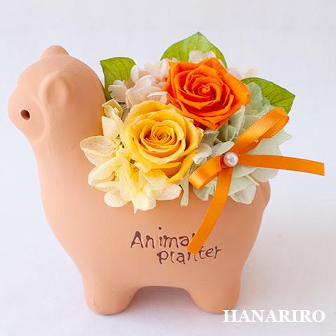 アレンジ「アルパカさんアレンジ」/プリザーブドフラワーギフト  【送料無料♪】