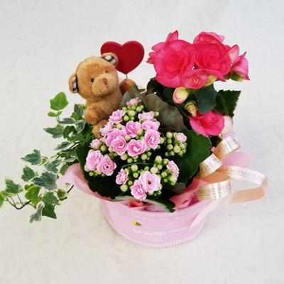 【アレンジ鉢】母の日アレンジ ベージュくまちゃんlarge ピンク  Y0001