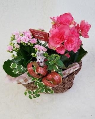 【アレンジ鉢】母の日アレンジ チェックうさぎ  Y0010