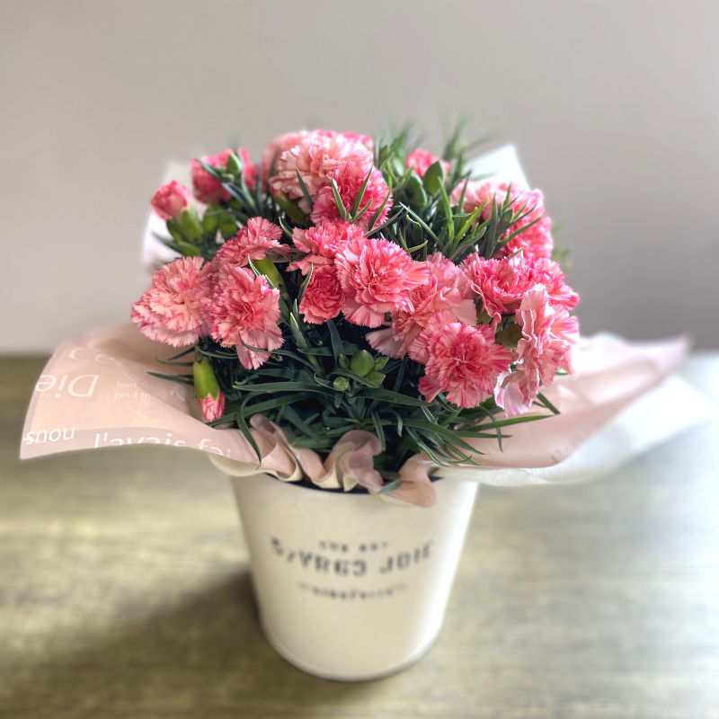 カーネーション花鉢 pink系複色