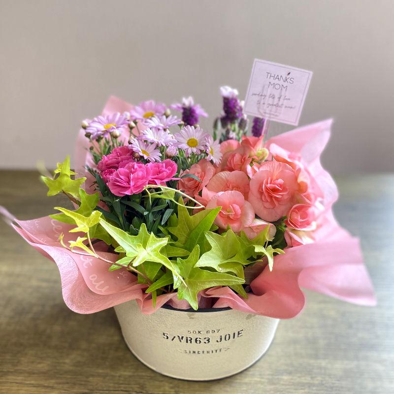 プランツ 季節の寄せ鉢 mother pink系 C