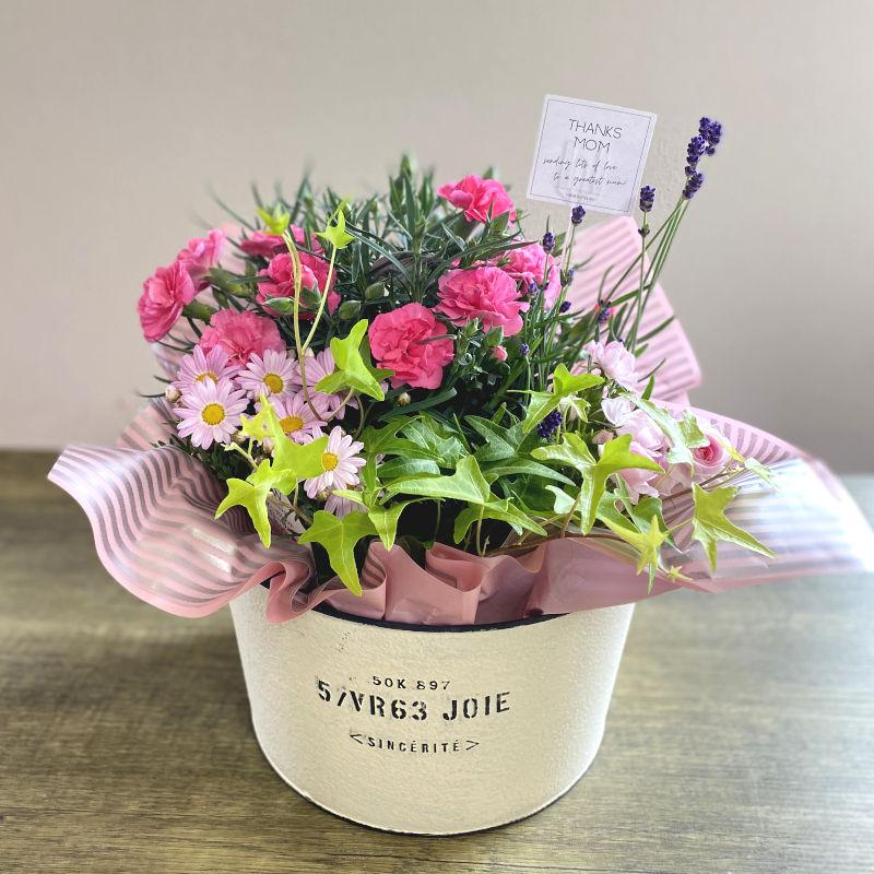 プランツ 季節の寄せ鉢 mother pink系 D