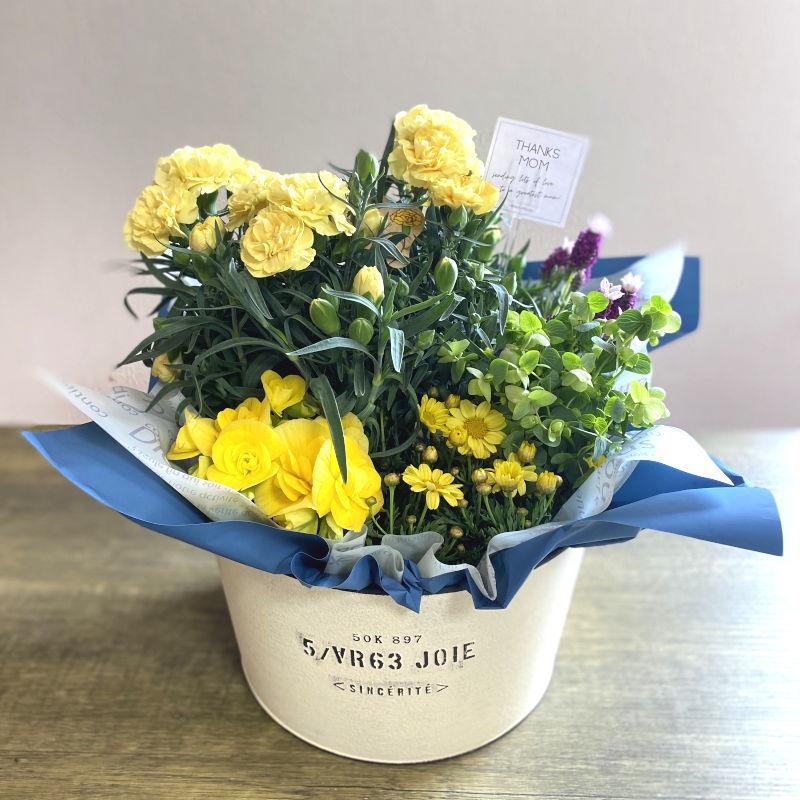 プランツ 季節の寄せ鉢 mother yellow系 D