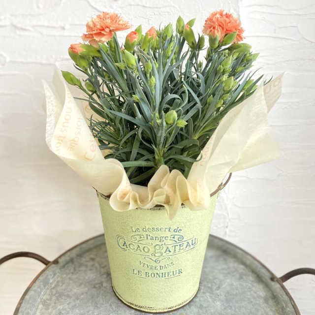 カーネーション花鉢 orange系