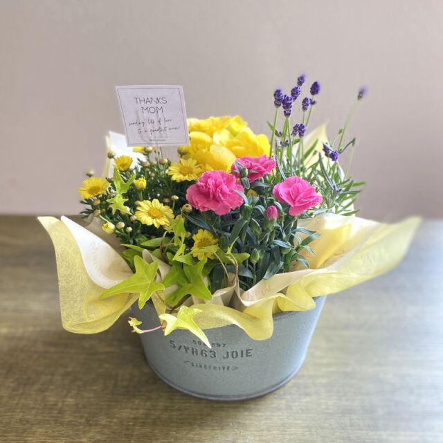 プランツ 季節の寄せ鉢 mother yellow系 C