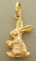 rabbit_front