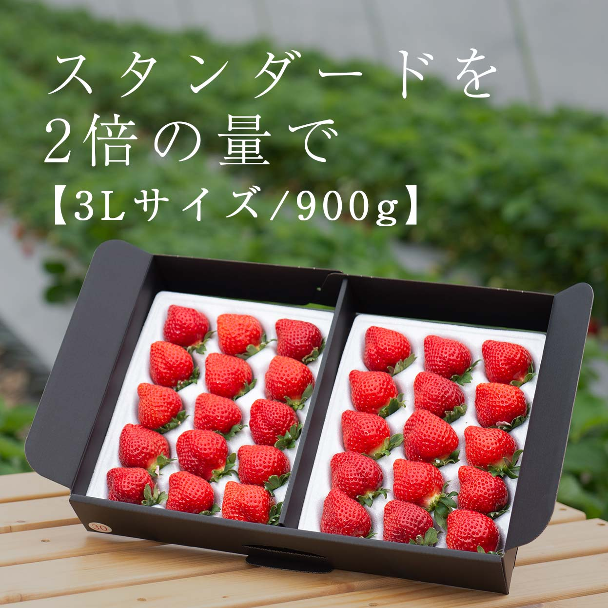 生果3L/900g