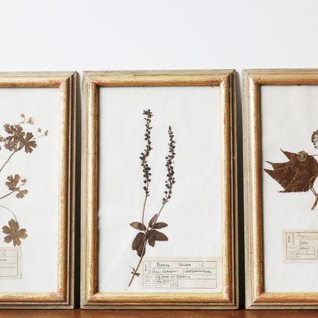 Antique Pressed Flower Frame