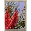 グリーティングカード 花 オーストラリア